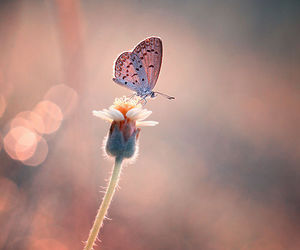 butterfly, flower, and nature image