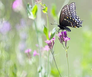 botanical, butterfly, and happy image