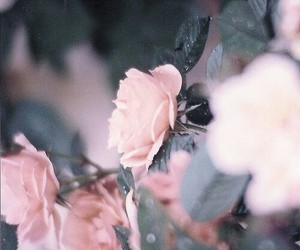 flowers, pale pink, and pink image