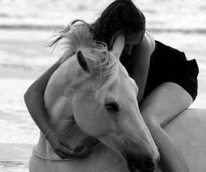 horse, hug, and love image
