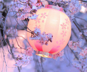 blossom, cherry blossoms, and lantern image