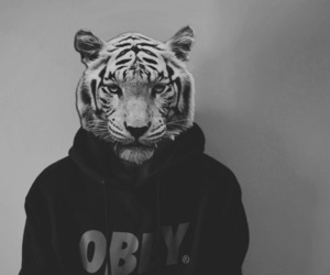swag obey tiger head yeah image