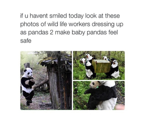 animal, pandas, and safe image