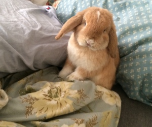 bunny, grunge, and pale image