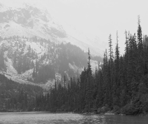 black and white, nature, and landscape image