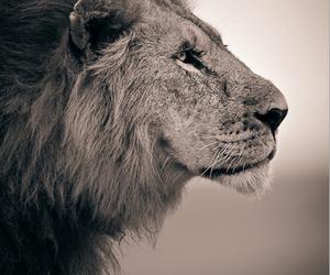 animal, portrait, and animals image