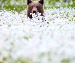 bear, flowers, and nature image
