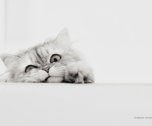 animal, animals, and b&w image