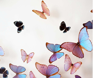 butterfly, color, and summer image
