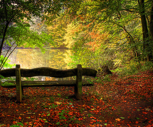 bench, fall, and forest image