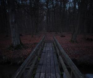 nature, dark, and adventure image
