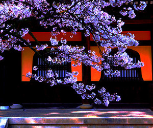 cherry blossoms, japan, and 桜 image