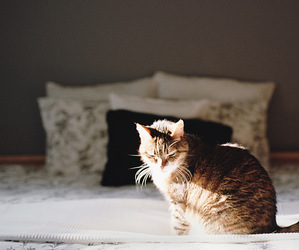 cat, animal, and bed image