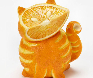orange, cat, and fruit image