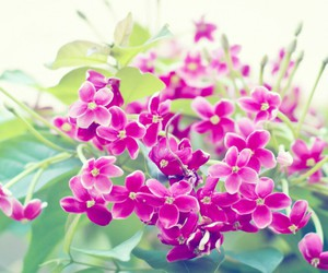 flowers, little, and pink image