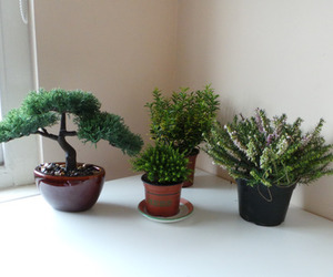 garden, minimalist, and nature image