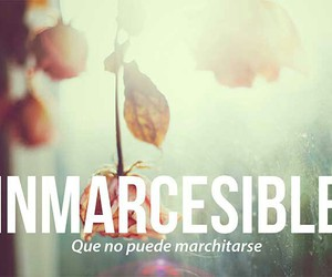inmarcesible, words, and español image