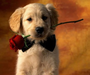 animals, rose, and puppy image