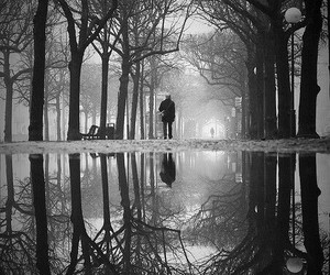 black n white, trees, and incredible image