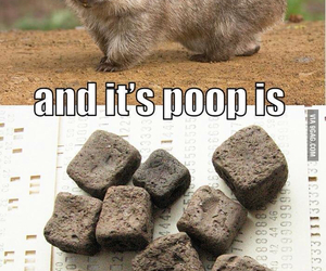 cubic, wombat, and haha image