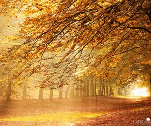 autumn, beautiful, and tree image