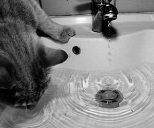 cat, faucet, and sink image