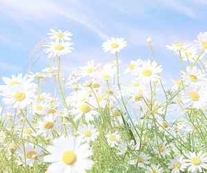 blue, daisies, and sky image
