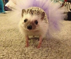 funny, hedgehog, and quotes image
