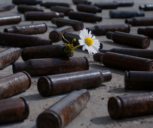 flowers, peace, and war image