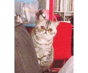 cat, caturday, and gato image