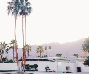 palm trees, indie, and summer image