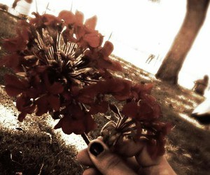 dark, flowers, and sepia image