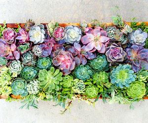 plants, cool, and hipster image