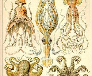 illustration, octopus, and squid image