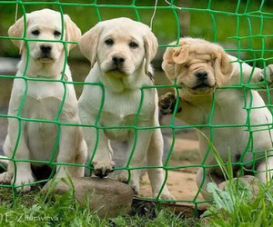 animals, fence, and dogs image