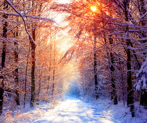 pretty, snow, and trees image