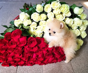 dog, flowers, and beautiful image