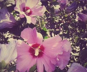 belle, fleur, and rose image