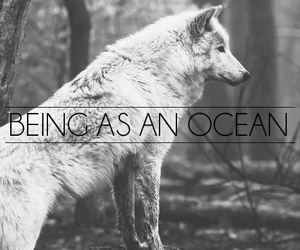 being as an ocean and wolf image