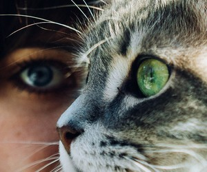 cat, eyes, and beauty image