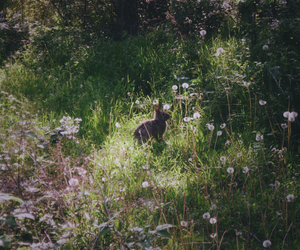 flowers, nature, and rabbit image