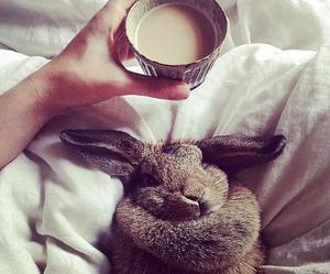 bunny, coffee, and rabbit image