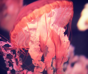 jellyfish and photography image