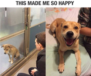 dog and happy image