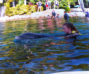 florida and discovery cove image