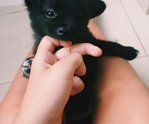 animals, black, and sweet image