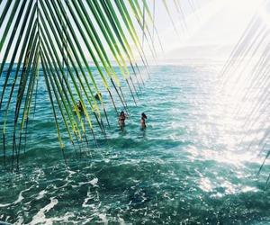 ocean, swim, and palm trees image