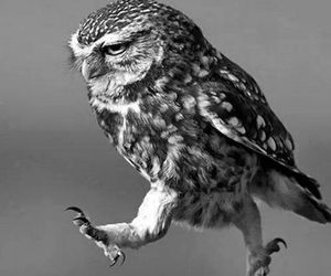 owl, funny, and hiboude image