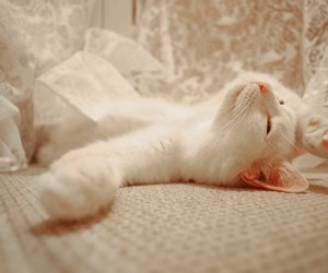 cat, cosy, and white image