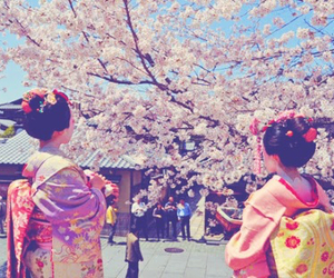 cherry blossoms, japan, and maiko image